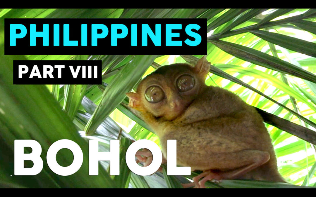 TOUR OF BOHOL, PHILIPPINES //  THE ULTIMATE DAY OF ADVENTURE